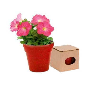 Torratxa biodegradable Petunias ADVERT