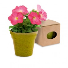 Macertero biodegradable Petunias ADVERT