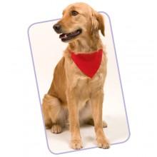 collar bandana personalitzat  ajustable